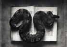 Kernan-Snake-Book-740x520